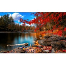 Fall Foliage Wallpapers - Photography for Download