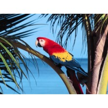 Parrot Beach Wallpapers - Photography for Download