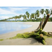 Tropical Shore Wallpapers - Photography for Download